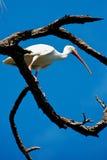 Grue dans l'arbre photographie stock