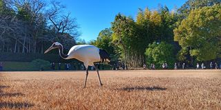 Grue dans le jardin d'Okayama Korakuen, Japon images stock