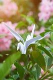 Grue de papier d'Origami Photographie stock