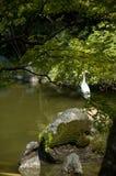 Grue et 2 tortues à Kyoto Image libre de droits