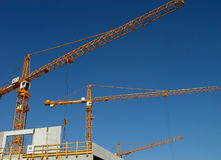 Grues Photo stock