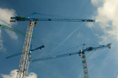 Grues Image stock