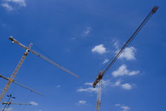 Grues Photographie stock