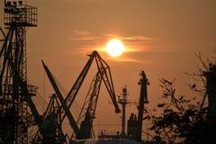 Grues au coucher du soleil Photographie stock libre de droits
