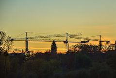 Grues dans le ciel Photo libre de droits