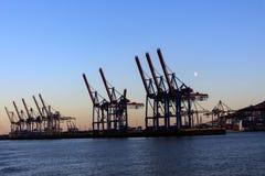 Grues dans le port de Hambourg au crépuscule Images stock
