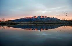 Grues de Sandhill Photographie stock libre de droits
