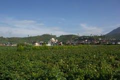 Gruli gospodarstwo rolne w Dieng, Indonezja Zdjęcie Stock