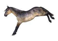 Grulla Horse on White Stock Photography
