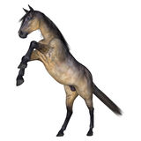 Grulla Horse on White Royalty Free Stock Images