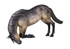 Grulla Horse on White Royalty Free Stock Photos