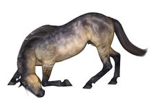 Grulla Horse on White Stock Image