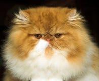 Grumpy Stock Image
