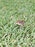 Grumpy Little Frog stock photography