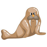 Grumpy Brown Walrus Stock Photography