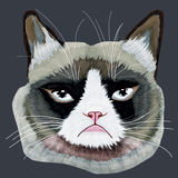 Grumpy cat head. Digital drawing Grumpy cat head stock photography