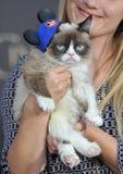 Grumpy Cat. LOS ANGELES, CA - MARCH 1, 2015: Grumpy Cat at the world premiere of Cinderella at the El Capitan Theatre, Hollywood Stock Photos