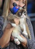Grumpy Cat Stock Photos