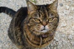 Grumpy cat stock photography