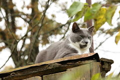 Grumpy cat on roof Royalty Free Stock Image