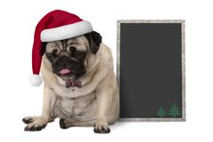 Grumpy Christmas pug puppy dog with red santa hat sitting next to blank blackboard sign Stock Images
