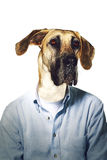 Grumpy dog's head on businessman body Stock Photography