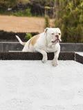 Grumpy Dog Royalty Free Stock Photo