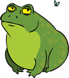 Grumpy fat frog cartoon character Stock Photos