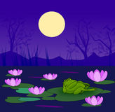 Grumpy Frog in the Lily Pond Royalty Free Stock Images
