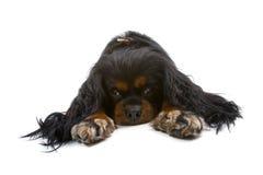 grumpy pooch royaltyfri fotografi
