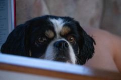 Grumpy Puppy peeking over banister stock images