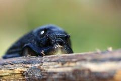 Grumpy Slug Stock Photos