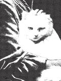 Grumpy white cat on womans lap - etching. A picture of a grumpy old cat on womans lap, in etching style Royalty Free Stock Photo