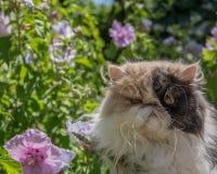 Grumpycat royaltyfri foto