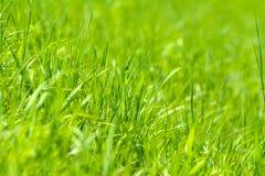 grund abstrakt green för bakgrundsdof-gräs Royaltyfria Foton