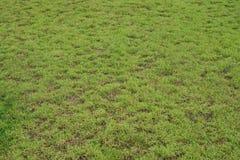 grund abstrakt green för bakgrundsdof-gräs Royaltyfri Bild