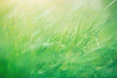 grund abstrakt green för bakgrundsdof-gräs Arkivbild