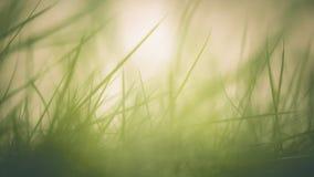 grund abstrakt green för gräs för framdel för fokus för bakgrundsbladdjup Arkivfoto