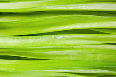 grund abstrakt green för gräs för framdel för fokus för bakgrundsbladdjup Royaltyfri Fotografi