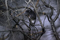 Grund-cuscus Lizenzfreies Stockbild