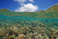 Grund korallrev med fisken nedanför vattenyttersida Royaltyfri Bild