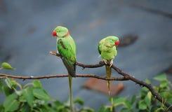 Grunda detta gulliga par av fåglar som hänger på på en härlig morgon royaltyfri fotografi