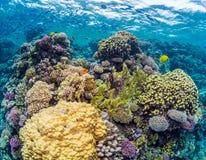 Grunda färgglade Coral Reef Royaltyfria Bilder
