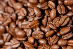 Grunda nytt kaffebönor grillade med frukterna av kaffeväxten som är fulla av korn royaltyfria foton