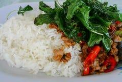 Grundläggande mat Thailand, basilika Arkivfoto
