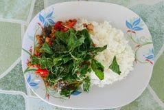 Grundläggande mat Thailand, basilika Fotografering för Bildbyråer