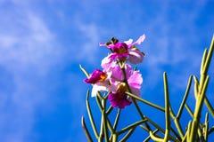 Grundorchideen und Niederlassung der schönen Blüte Stockbilder