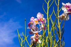 Grundorchideen und Niederlassung der schönen Blüte Lizenzfreies Stockbild