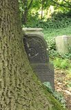 Grundstein ingrown zum Baum lizenzfreie stockbilder