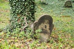 Grundstein ingrown zum Baum lizenzfreie stockfotografie